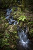 Ferns by Creek Galicia Spain royalty free stock images