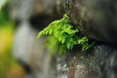 Ferns growing on a rocky ledge Stock Photo