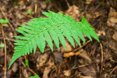 Ferns growing in wet deep highland forest Royalty Free Stock Image