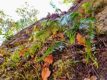 Ferns growth like parasite on the little rock cliff stock photos