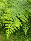 Ferns And Horsetails, Vegetation, Fern, Plant
