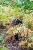 Ferns i skog Arkivfoton