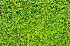 Ferns leaf for background Stock Image