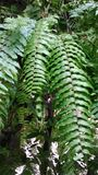 Ferns leave in tropical green garden Royalty Free Stock Image