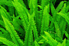 Ferns Macro Stock Photos