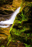 Ferns and moss growing off a rock and a waterfall in Holtwood, P Royalty Free Stock Image