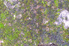 Ferns and Moss on Old Concrete Wall. Royalty Free Stock Images