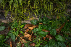 Ferns and moss, the undergrowth. Texture from mountains, in the undergrowth Royalty Free Stock Image