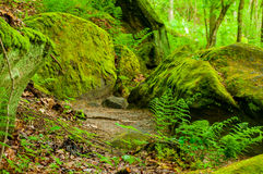 Ferns, mosses, and boulders Royalty Free Stock Image