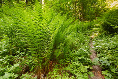 Ferns on the mountain forest Stock Photo