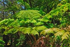 Ferns na floresta húmida fotos de stock royalty free