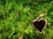 Ferns; nature and fresh background. Heart shape black board on fern, valentine`s day background Royalty Free Stock Images