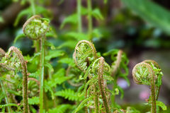 Ferns Stock Photo