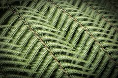 Ferns, New Zealand. NZ iconic silver ferns in lower north island Nga Mana in Waikanai royalty free stock image