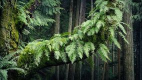 Ferns On Old Trunk In Breeze stock video footage