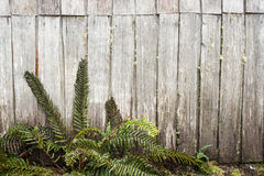 Ferns and old wooden cabin Royalty Free Stock Images