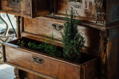 Ferns in open boxes of a vintage chest. old chest of drawers. aged furniture, design. Stock Photos