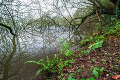 Ferns and other plants on the bank of a lake. Ferns and other plants grow on the bank of a lake at The Ercall near Telford, Shropshire, England stock image