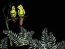 Ferns with Parrots. Parrots in the tree and ferns on the forest floor on a black background. Suitable for text or another image Royalty Free Stock Image