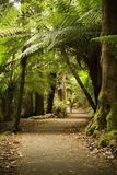 Ferns and Pathway. Lush pathway through the forest lined with large ferns stock image
