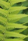 Ferns patterns Stock Photography