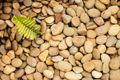 Ferns, pebbles texture or background. Stock Photos