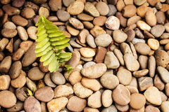 Ferns, pebbles texture or background. Royalty Free Stock Photo