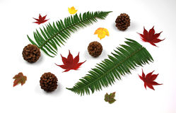 Ferns, pine cones and leafs Royalty Free Stock Photos