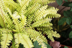 Ferns planted in the leafy garden is a green background Stock Image