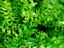 Ferns plants and leaves fresh green foliage natural floral fern background. stock photo