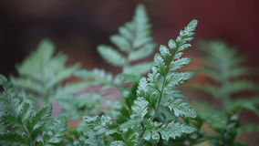 Ferns in the rain stock video footage