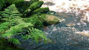 Ferns By River stock video footage