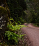 Ferns on the road of Yungas Stock Images