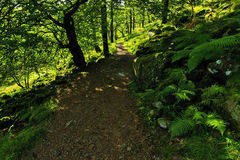 Ferns and rocks covered in moss strewn along the Watkins Path Snondon Stock Photo