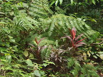 Ferns and shrubs - tropical rainforest Stock Photo