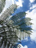 Ferns in sky Royalty Free Stock Photos