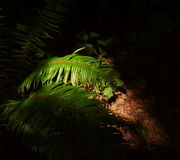 Ferns sob o sol Foto de Stock