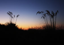 Ferns of the South Island. Ferns silhouetted against the sunset of the Tasman sea Stock Photo