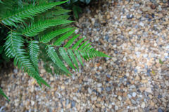 Ferns and stone floors Stock Photography