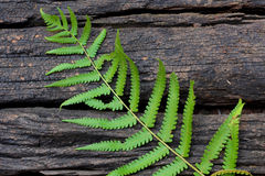 Ferns textured Stock Image