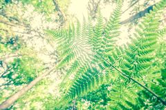 Ferns and trees Stock Image