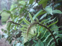 Ferns in tropical rain forest Stock Photos
