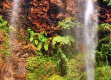 Ferns and tropical waterfall Stock Photos