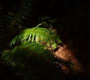 Ferns under sun Stock Photo