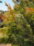 Ferns and vegetation blowing in wind Royalty Free Stock Photography