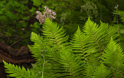 Ferns and Vegetation Stock Photo