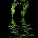 Ferns with water reflection Stock Photos