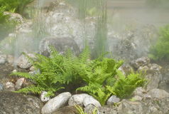 Ferns in the water vapor. In european park Stock Photography