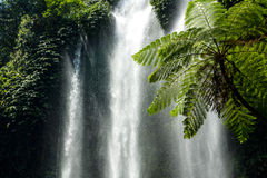 Ferns and waterfall. Waterfall in  arborescent fern setting Royalty Free Stock Photo