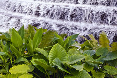 Ferns by waterfalls Stock Image